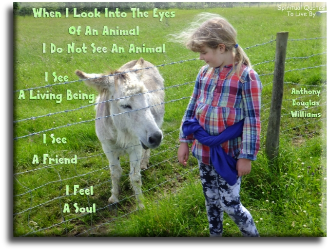 Anthony Douglas Williams quote: When I look into the eyes of an animal, I do not see an animal, I see a living being, I see a friend, I feel a Soul. - Spiritual Quotes To Live By