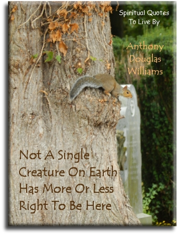 Anthony Douglas Williams quote: Not a single creature on earth has more or less right to be here. - Spiritual Quotes To Live By