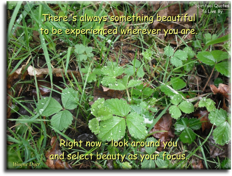 Wayne Dyer quote: There is always something beautiful to be experienced wherever you are. Right now, look around you and select beauty as your focus.Spiritual Quotes To Live By