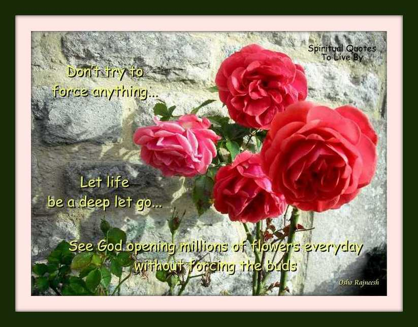 quote from Osho on photograph of roses