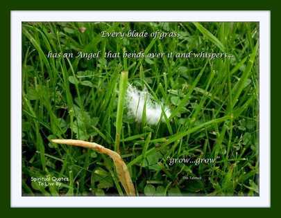 Every blade of grass - BLOG