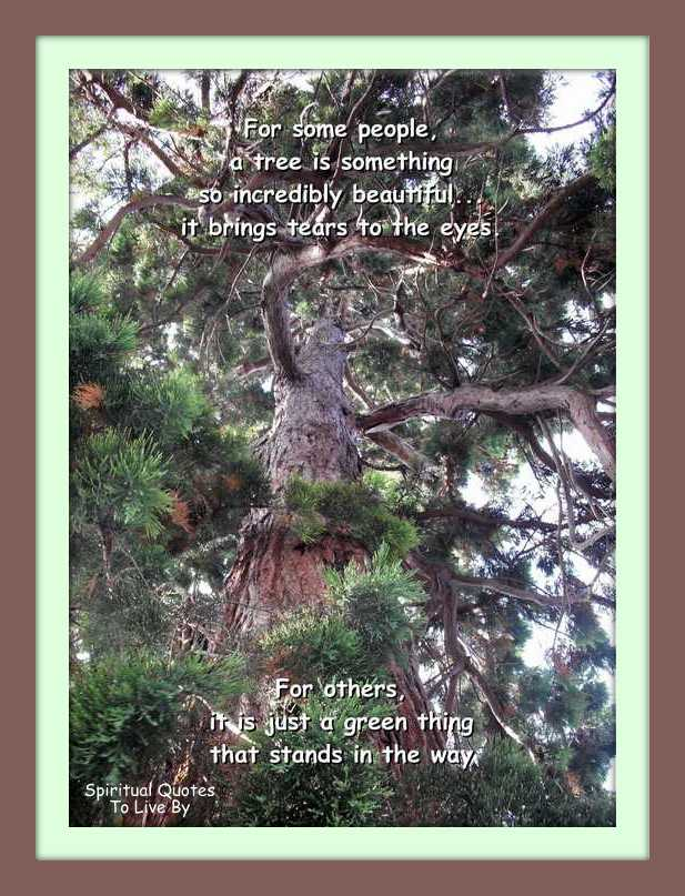 A tree is something so incredibly beautiful - quote on photo