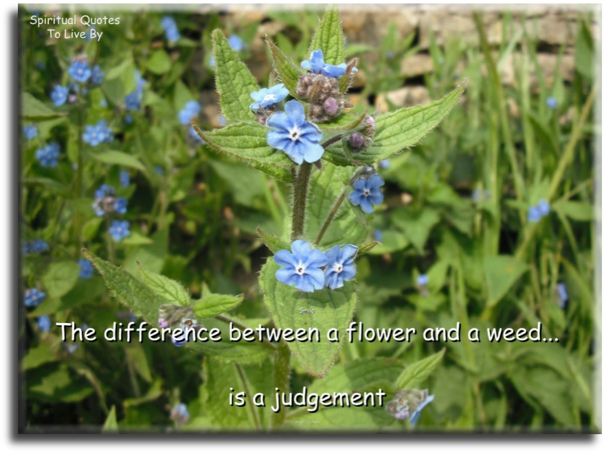 The difference between a flower and a weed is a judgment - Spiritual Quotes To Live By