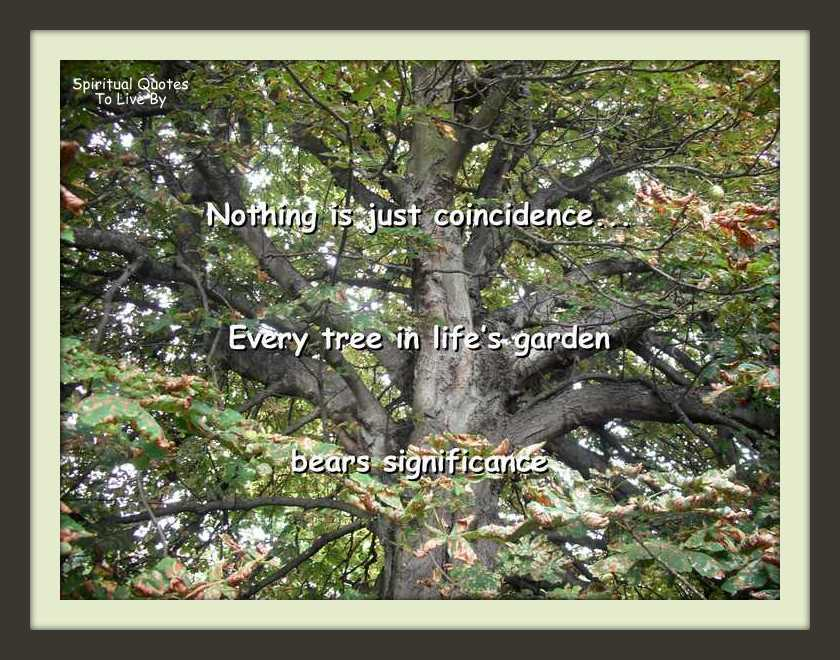 Nothing is just coincidence quote on photo of tree