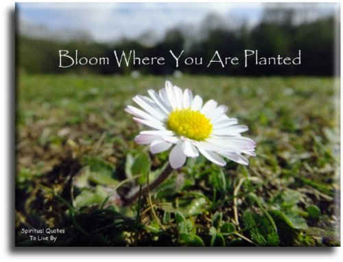 Bloom where you are planted - Spiritual Quotes To Live By