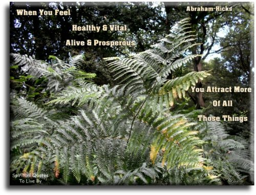 When you feel healthy and vital and alive and prosperous, you attract more of all those things - Abraham-Hicks - Spiritual Quotes To Live By