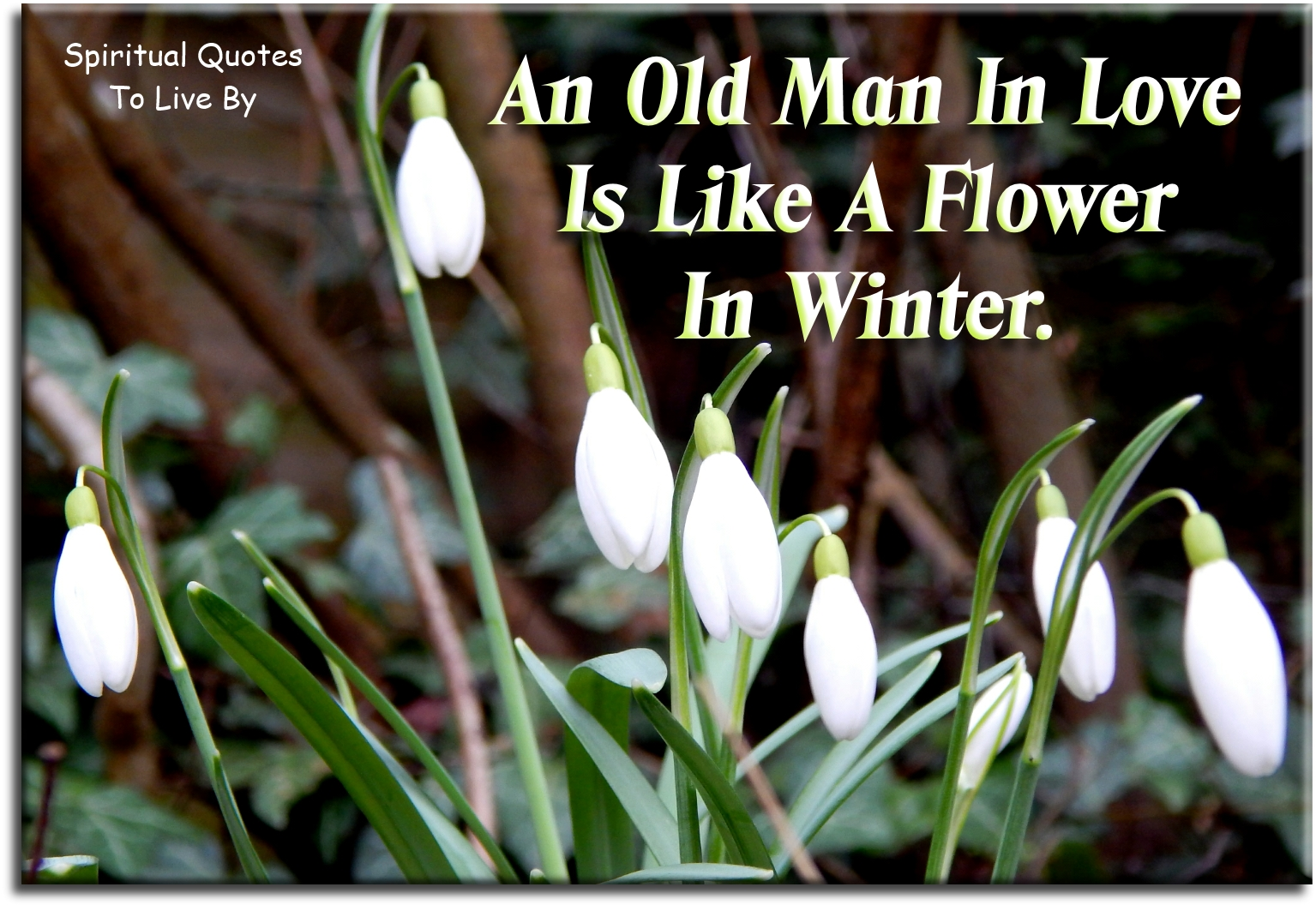 Proverb: An old man in love is like a flower in winter. - Spiritual Quotes To Live By