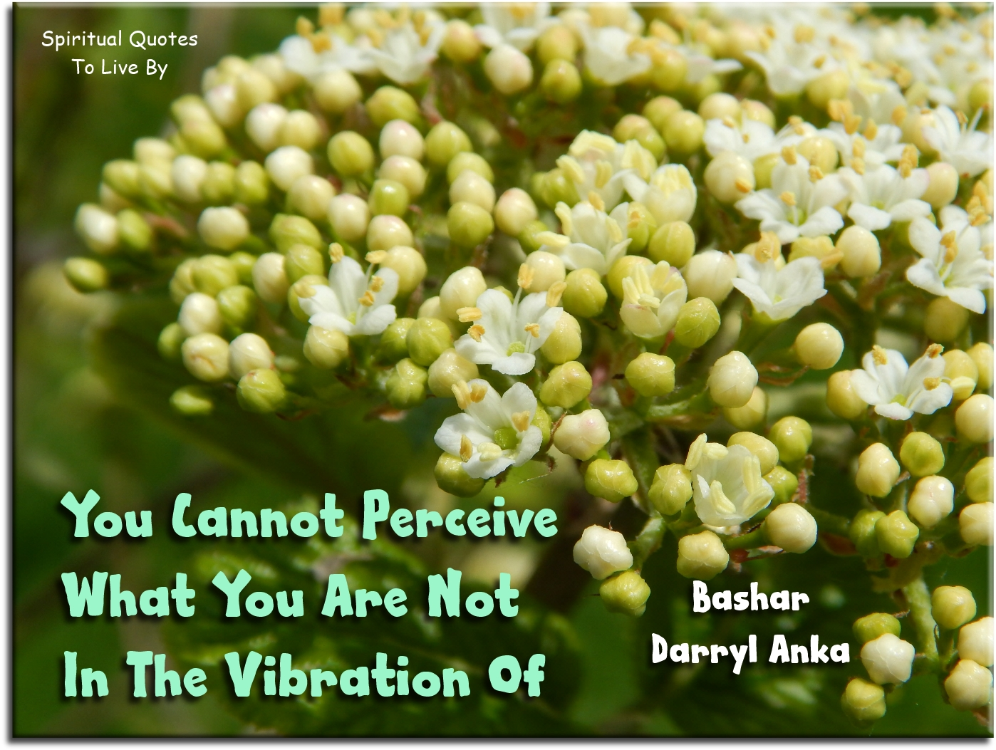 Bashar-Darryl Anka quote: You cannot perceive what you are not in the vibration of. Spiritual Quotes To Live By