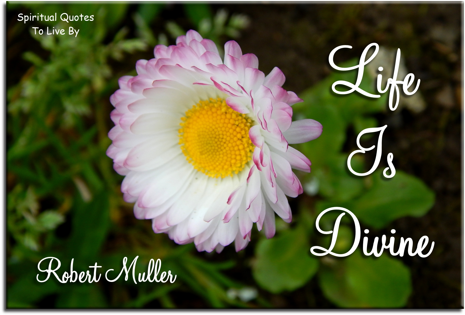 Robert Muller quote: Life is Divine. Spiritual Quotes To Live By