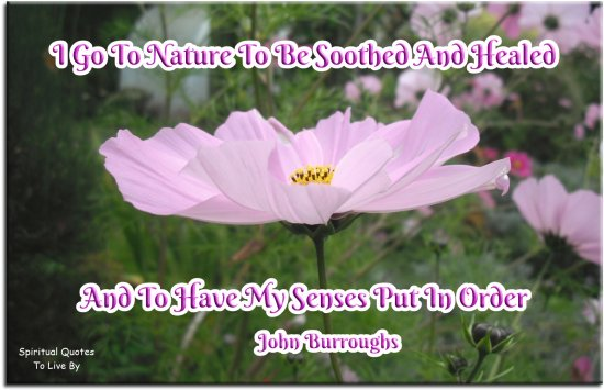 John Burroughs quote: I go to nature to be soothed and healed, and to have my senses put in order. - Spiritual Quotes To Live By