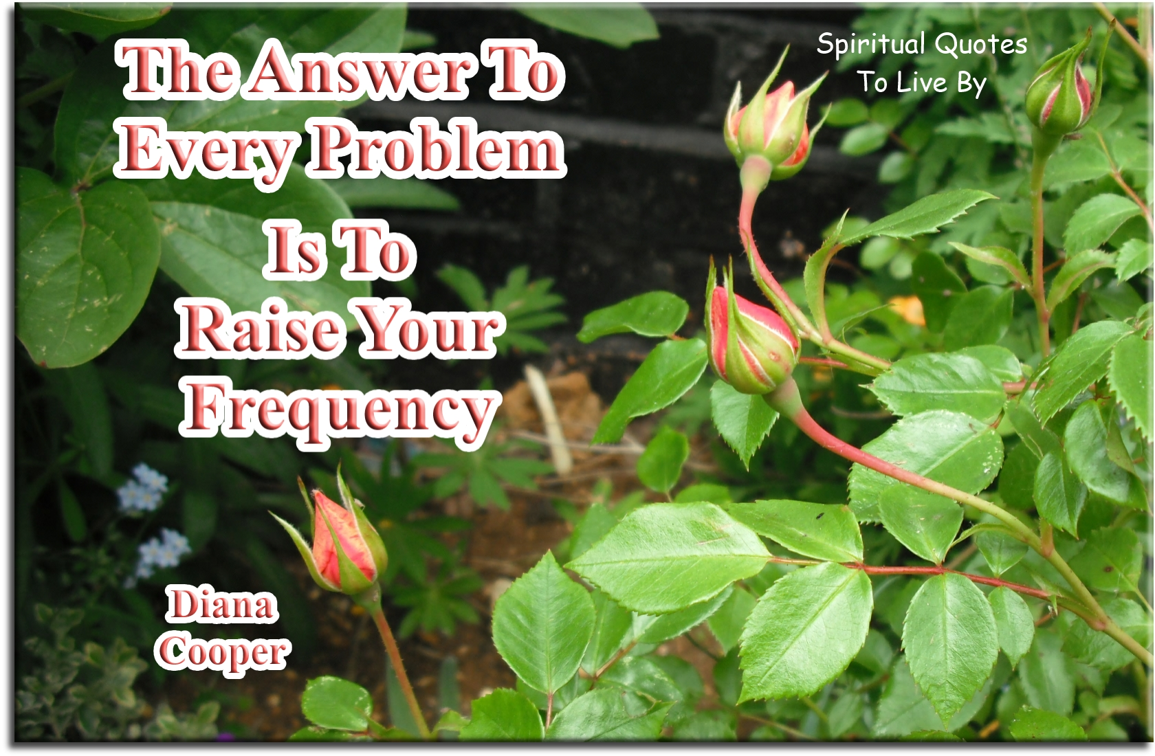 Diana Cooper quote: The answer to every problem is to raise your frequency. - Spiritual Quotes To Live By