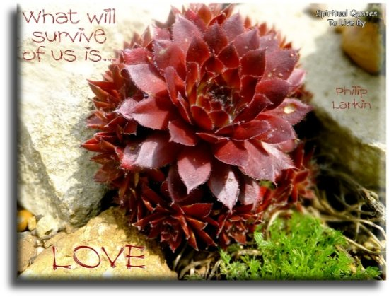 Phillip Larkin quote: What will survive of us is love. - Spiritual Quotes To Live By