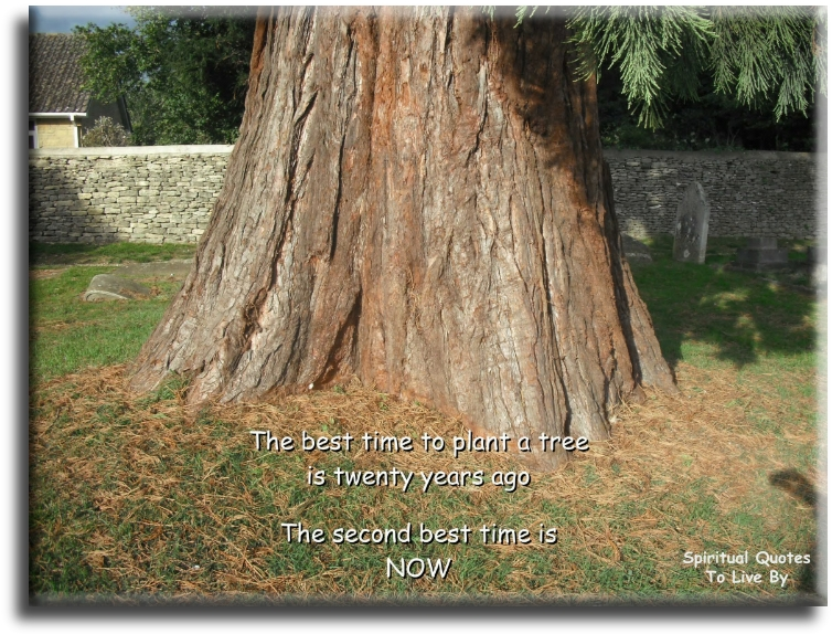 The best time to plant a tree is twenty years ago, the second best time is now - Spiritual Quotes To Live By