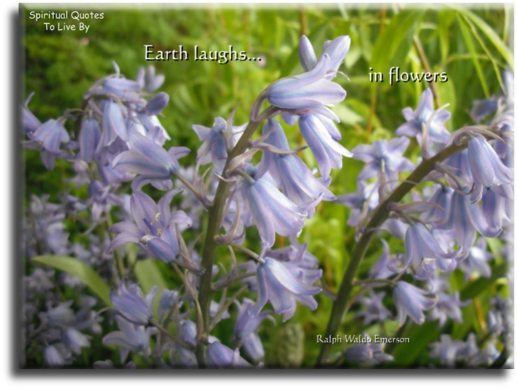 Earth laughs in flowers - quote on photo of bluebells - Spiritual Quotes To Live By