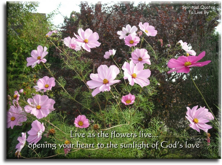 Live as the flowers live, opening your heart to the sunlight of God's love - Spiritual Quotes To Live By