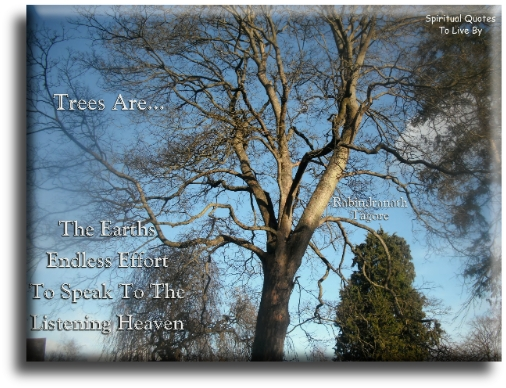 Trees are.. quote on photo of tree. Spiritual Quotes To Live By