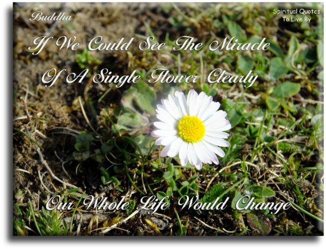 Buddha quote: If we could see the miracle of a single flower clearly, our whole life would change. - Spiritual Quotes To Live By