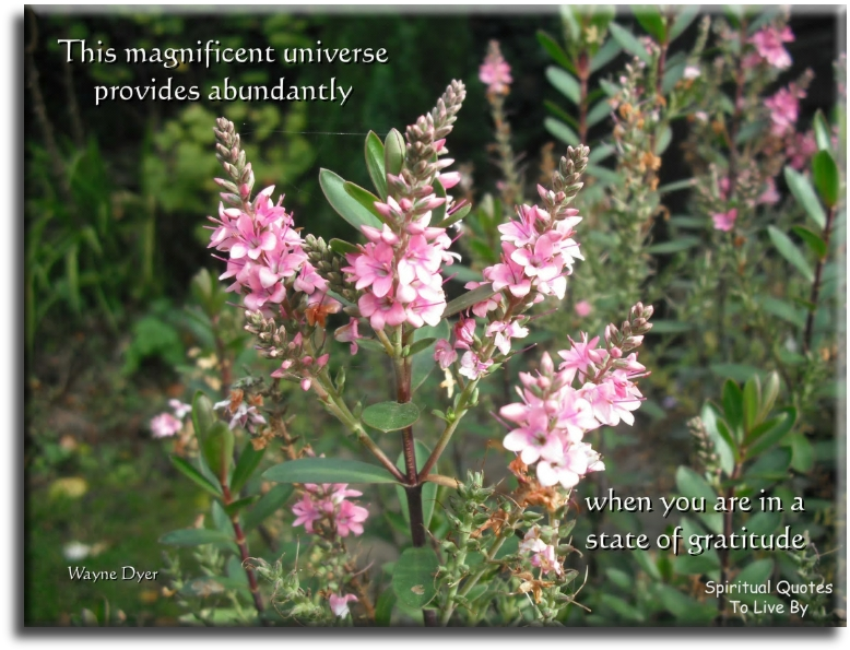 Wayne Dyer quote: This magnificent Universe provides abundantly, when you're in a state of gratitude. Spiritual Quotes To Live By
