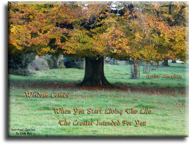 Wisdom comes only when you stop looking for it and start living the life the Creator intended for you - Native American Hopi - Spiritual Quotes To Live By
