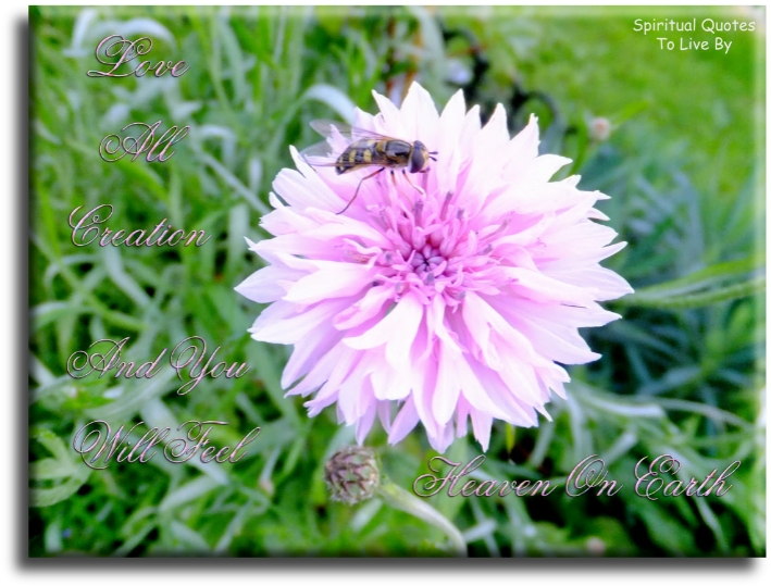 Love all creation and you will feel Heaven on Earth - Spiritual Quotes To Live By